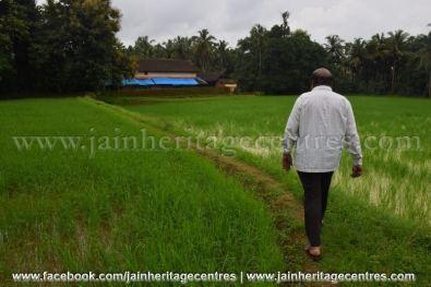 Fields leading to Abbana Bettu Basadi - Mudaru