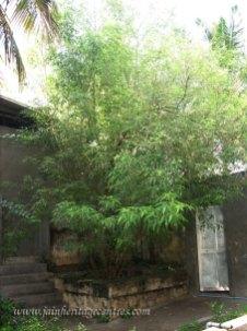 srirangapatna_20111020_1944415854