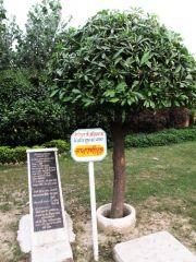 sri_1008_parswanath_swamy_digambar_jain_temple_atishaya_kshetra_vahalna_uttar_pradesh_20120419_1451601618