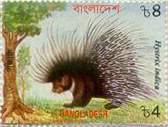 Porcupine - Symbol of 14th Jain Tirthanakar Ananthanath