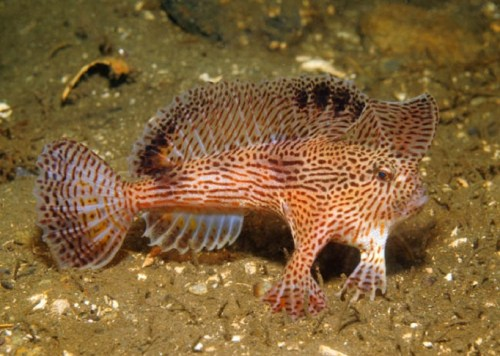 Hand fish
