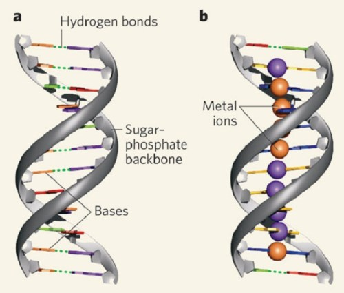 Artificial DNA