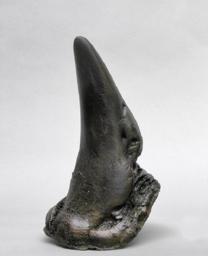 Rhinoceros horn