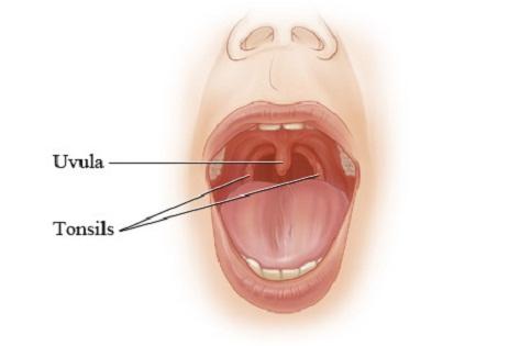 Uvula