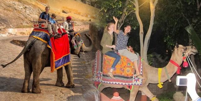 Camel And Elaphant Safari