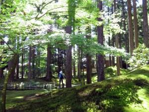 苔庭を散歩した(6月4日)