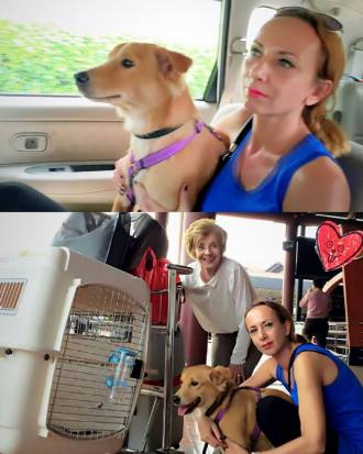 Remi on his way to a new life! 🐶 Remi along with his 11 sibblings were taken from a hoarder about a year ago. All were in a horrible physical and psychological condition, unfortunately only 4 survived. Hoarders think they are doing the right thing by continue to rescue animals but due to a lack of space and money these animals live in very unhealthy circumstances and suffer a lot. Unfortunately hoarders dont realize that they are abusing their animals. Luckily, that is all in the past & Remi is on his way to Holland where he has been adopted by a relative of 1 of JAAN's founders! A happy life is awaiting him. Remi has been microchipped since that is compulsory in most countries, including Holland. Once in Holland Remi's mom will go to the vet who will then register Remi and he will officially be part of the family! Microchipping is like a KTP or like a Kartu Keluarga and is therefore very beneficial. Have a safe trip sweet Remi! You are going to have a super duper life with Barbara and Wouter who are going to spoil you like crazy!