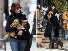 Sandra Bullock with her rescues Poppy & Ruby.