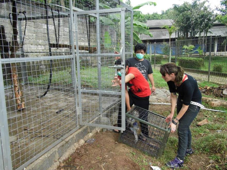 The JAAN team releasing a new Monkey into the enclosure.