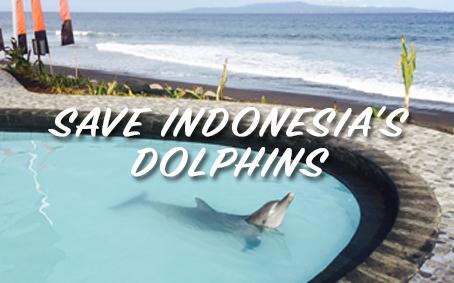 indo dolphin