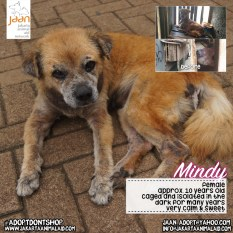 This little old lady did have a horrible life. Mindy lived in a closed dark cage (made of bamboo) right above a gutter for 7 + years before JAAN rescued her. She was never let out & had to live there 24/7 her urine, waste & food was all there, in a tiny, dirty & dark area. It was very shocking for the team. She developed many health issues but one being the scabies all over, she was practically skin, no fur. Her skin might never fully recover because it was pretty severe after such long term neglect, isolation & stress. She is quite & keeps to herself but we re happy seeing her in much better shape & seeing her tail wag again!