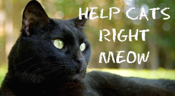 URGENT HELP FOR CATS