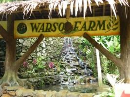 Belah durian Di Kebun Duren Warso farm – wisata keluarga