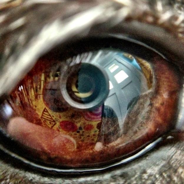 Lucy's Eye
