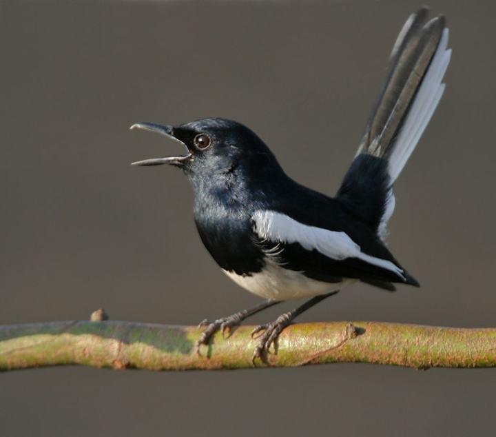Sebagai salah satu pencinta burung kicau Rahasia Burung-Burung Juara Lomba