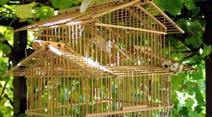 Kandang yang Tepat Membuat Burung lebih Bersemangat