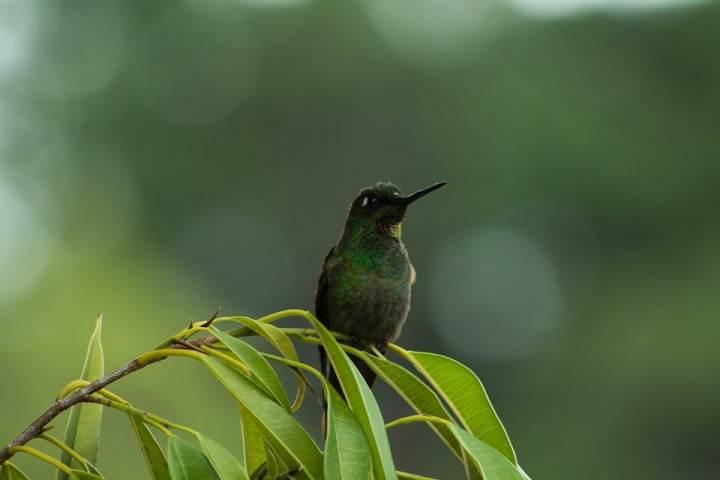 Untuk sanggup membuatkan seekor kolibri yang layak lomba dan gacor Tips Merawat Burung Kolibri Kesayangan