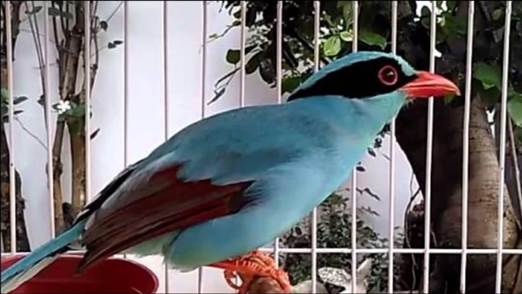 Indonesia mempunyai banyak burung endemik anggun yang tersebar di Pulau Jawa 6 Burung Endemik Tercantik di Pulau Jawa