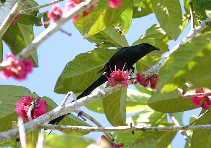 Papua merupakan salah satu pulau di Indonesia yang mempunyai bermacam-macam spesies burung Yuk, Kenali 10 Burung Endemik Terunik di Papua!