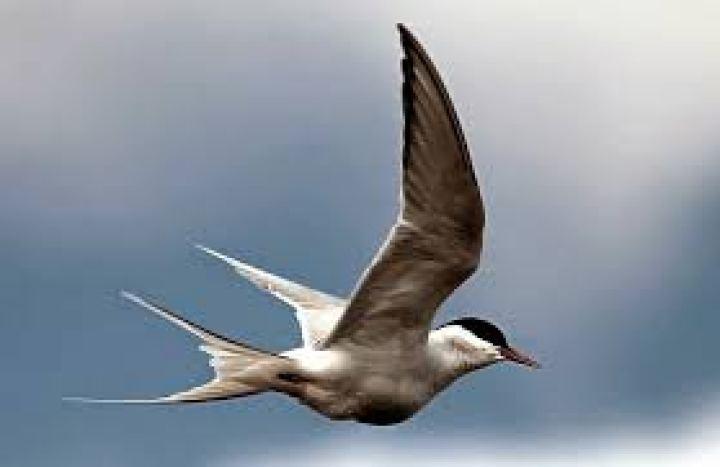Pantai Cemara yaitu salah satu tempat migrasi favorit bagi burung Enam Burung dari Rusia Ini Pernah Bermigrasi ke Indonesia