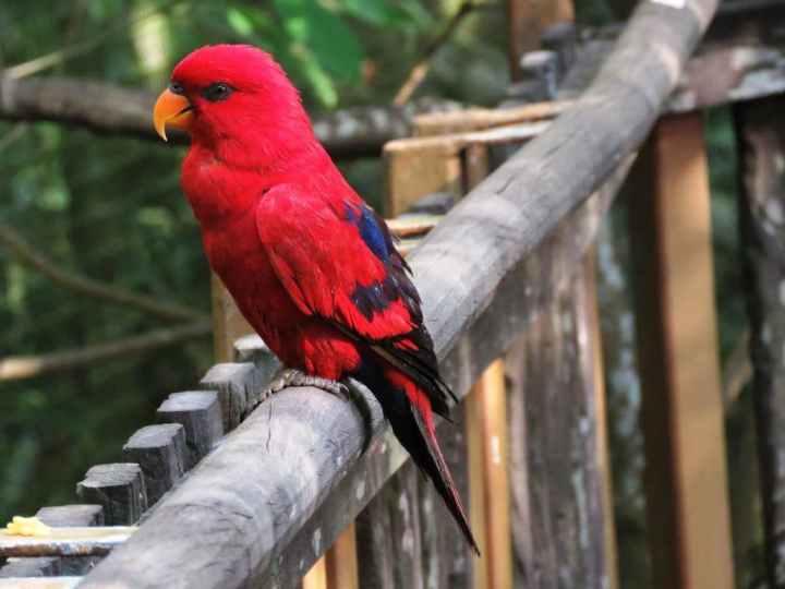 Burung Nuri - pixabay.com