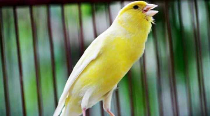 Suara Burung Dapat Menciptakan Energi Baru