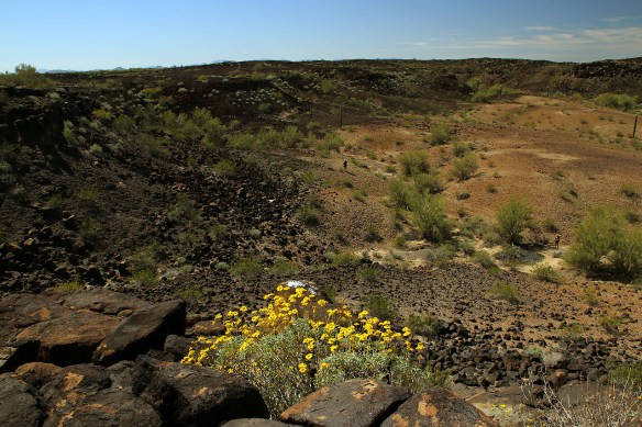 As we hiked and headed up to some higher ground... we found these beautiful yellow flowers all over the volcanic rock upland.