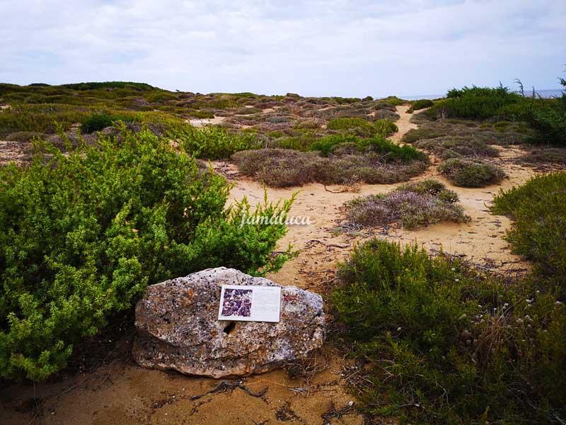 Parco delle Dune di Campomarino di Maruggio