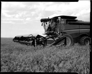 A massive 2014 John Deere combine harvests wheat near Altus, Oklahoma.