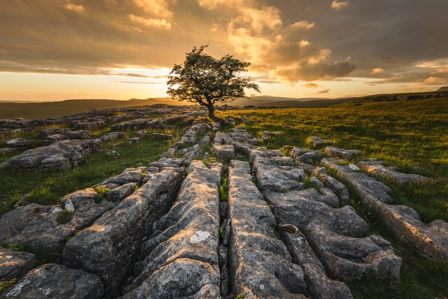 Winskill Stones lone tree in the Yorkshire Dales at sunset