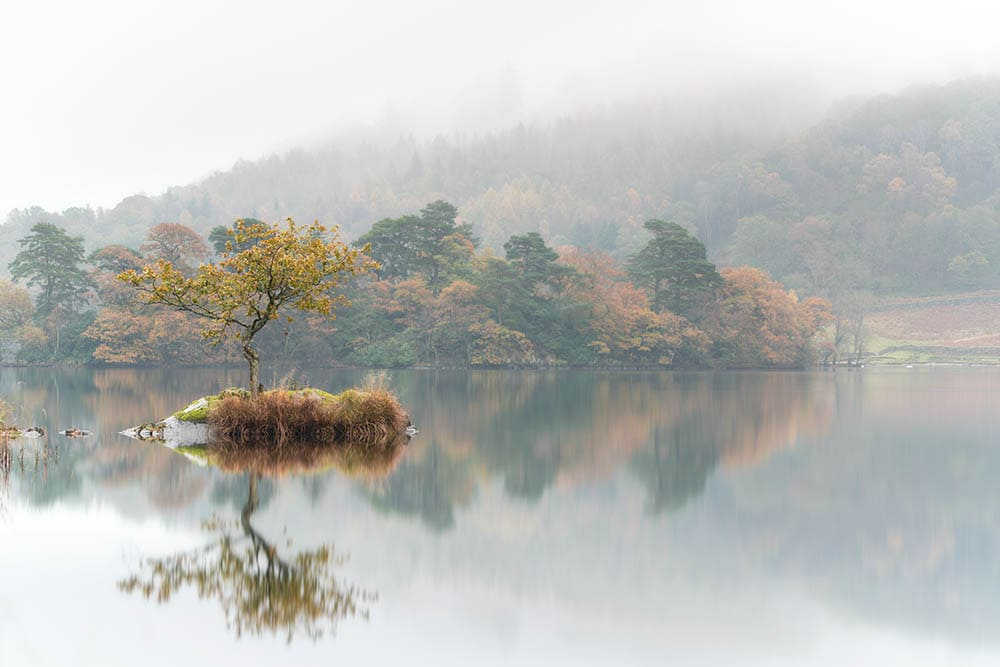 The lone tree at Rydal Water in the Lake District on a misty autumn morning