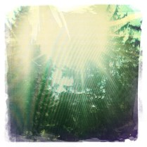 Starburst Glare, Devon PA (Rephotographed) (3)
