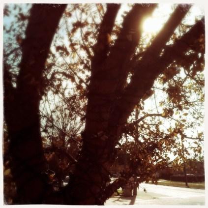 Lewisville-20111216 2