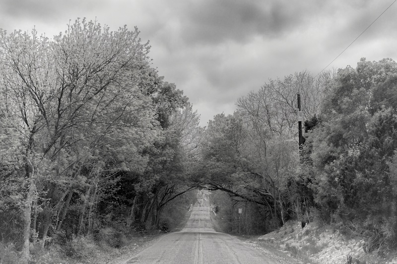 365.81 Spring Creek Forest Preserve Photowalk