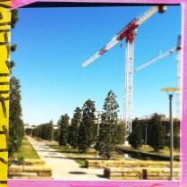 Cranes in the afternoon mist - Loftus-Big Up