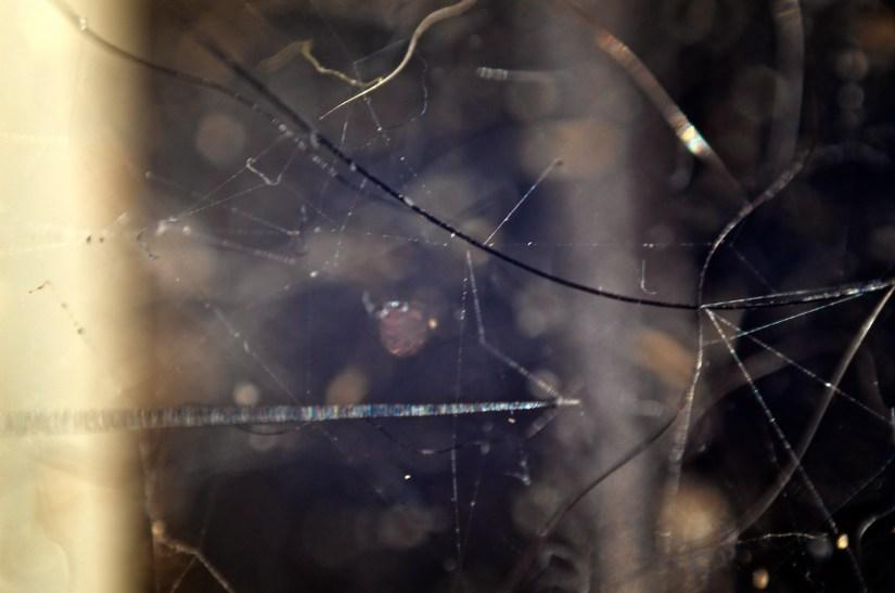 365 346 schizophrenic spiderweb 20121208©JamesECockroft