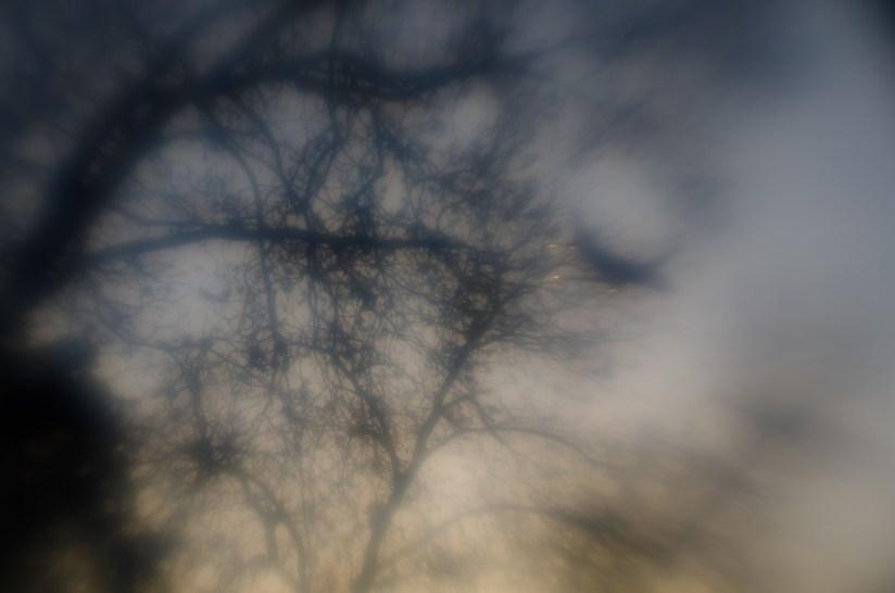 7 52 15 Lens Babylangoliers©JamesECockroft 20130410