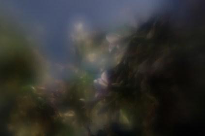 7-52-49| LensBaby houseplant jungle|©JamesECockroft-20131204