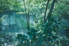 2014-Arboretum, Lake Carolyn, Random|23|©JamesECockroft-20141224