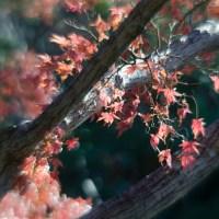 Fort Worth Botanical Gardens D7000105©JamesECockroft 20140104