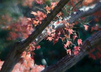 Fort Worth Botanical Gardens D7000 105 ©JamesECockroft-20140104