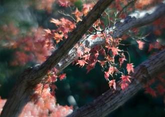 Fort Worth Botanical Gardens D7000|105|©JamesECockroft-20140104
