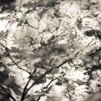 Dallas Arboretum 2014052958©JamesECockroft 20140529