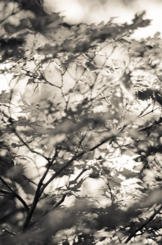 Dallas Arboretum 20140529|58|©JamesECockroft-20140529