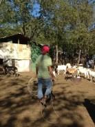 the goat wrangler