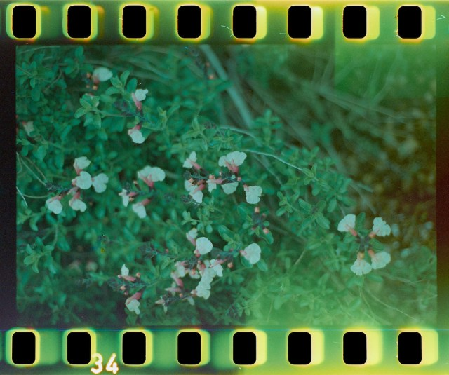 end of the roll
