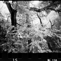 20160821 0957 Random FW Botanical Garden Random ©JamesECockroft 0266