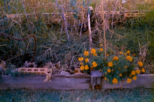 Overgrown - Irving, TX 2016