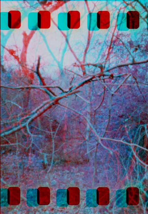 purple-woods-anaglyph