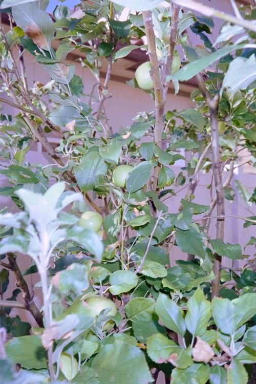 Scenes-from-the-Garden-7
